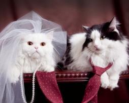 Matrimonio di Jana e Graziano